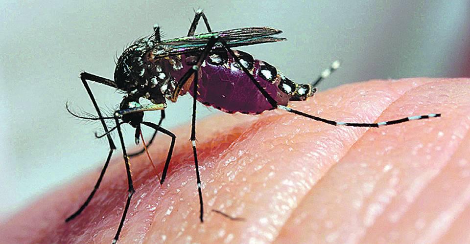 Mosquito da Dengue (2)-U10160286541363B-U101603693735qjD-269x140@GP-Jornal-INTERIOR